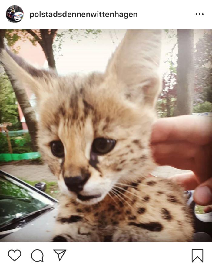 Instagram politie stadsdennen serval