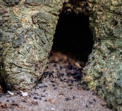 kleine dieren in het bos Fotograaf Robert Nijhuis