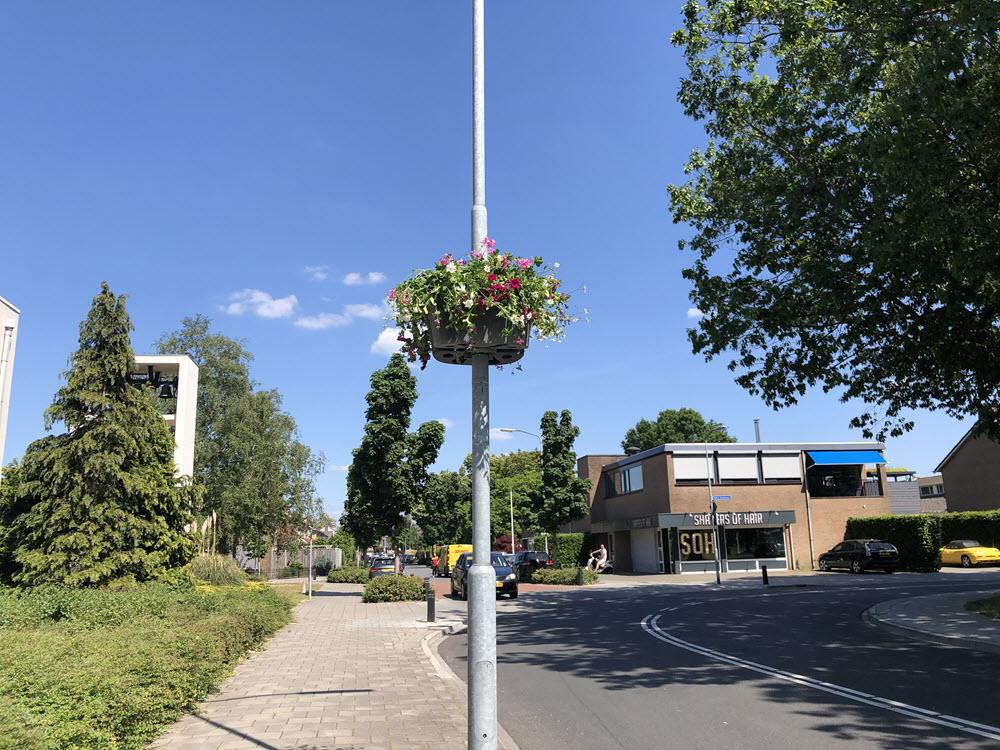 Hanging basket Wijkvereniging Stadsdennen Harderwijk