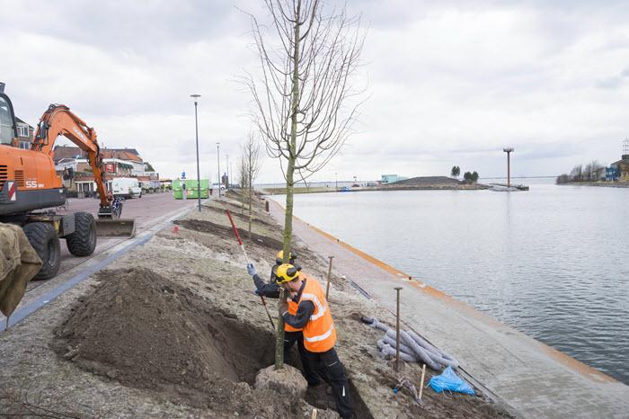 Bomen poten Boulevard Harderwijk