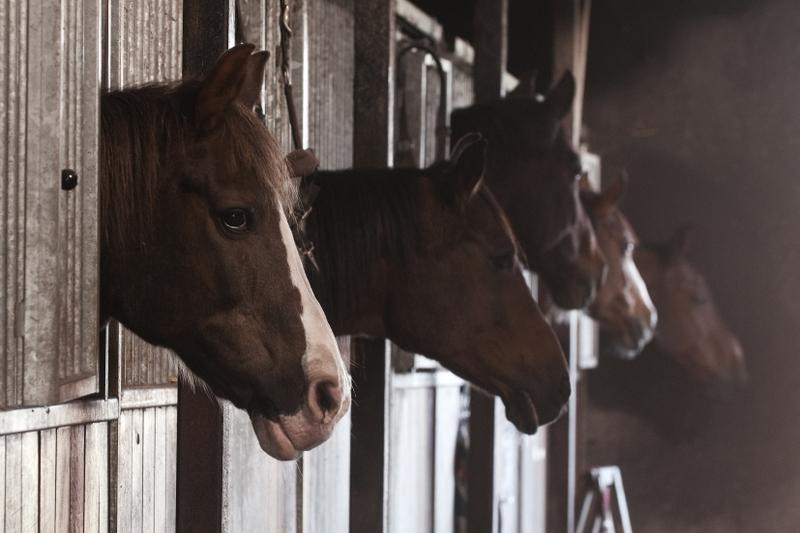 Paardenpensionstalling Olofsen