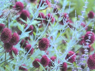 Lezing Groei & Bloei 1+1= 3 Wat maakt dat een plantencombinatie werkt?