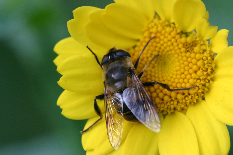 Citaten Over Bijen : Alles over bijen op landgoed staverden harderwijksezaken