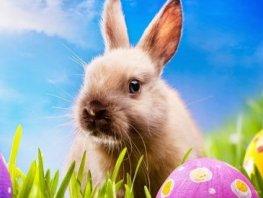 Kom 1e of 2e Paasdag vanaf 11.00 uur je Paasfeest met een Paasbrunch vieren in de bossen op Landgoed Stakenberg