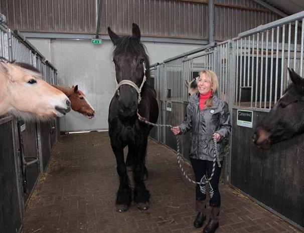 Liefde voor paarden in Hierden