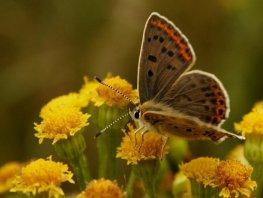 Vlinderexcursie