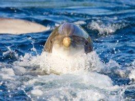 Waterpark moet Dolfinarium helpen op te krabbelen