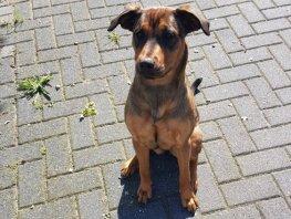 Gemeente Harderwijk start hondenproject