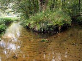 Wandeling langs beken en waterpartijen