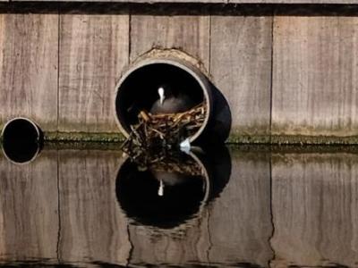 De allereerste bewoner van het Noordereiland heeft haar nest opgeleverd gekregen!