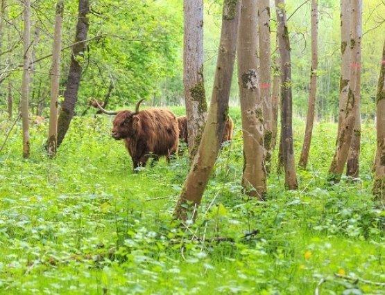 Natuurmonument kapt essen in Harderbos en plant andere boomsoorten terug