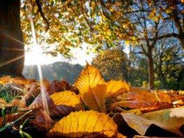 Wandeling waarbij we ons bewust worden van onze 7 energie punten