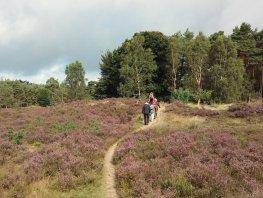 Nieuwe wandelroutes en Linnaeuspad in Harderwijk