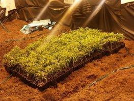 Drugspand in Harderwijk mag toch drie maanden dicht