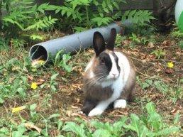Vermiste en gevonden huisdieren Harderwijk en Hierden