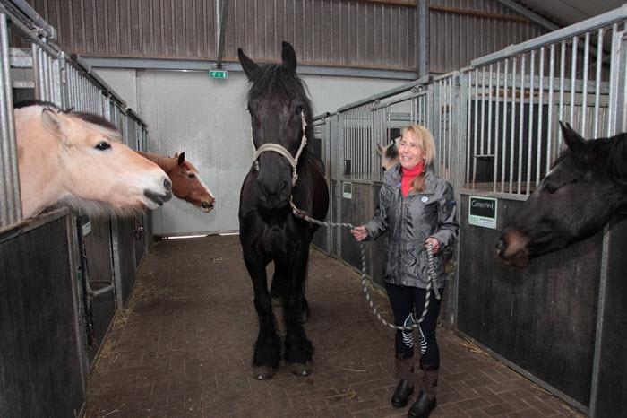 Workshop over hooggevoeligheid en paarden