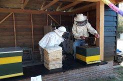 Open bijenstal
