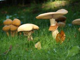 Paddenstoelenexcursie op landgoed Oud-Groevenbeek in Ermelo zaterdag 21 september 2019