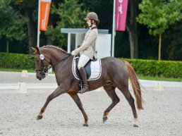 New Forest Sportdag