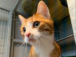 Vermiste en gevonden huisdieren in Harderwijk en Hierden