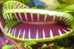 Groei & Bloei lezing over vleesetende planten