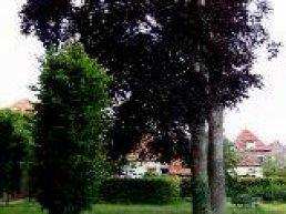 Plant een gratis boom in uw voortuin