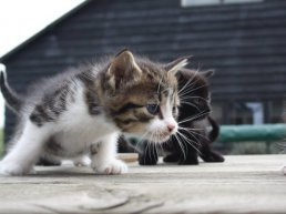 Pas op! Kattenziekte in Harderwijk en Ermelo