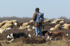 Op zoek naar de herder en de kudde