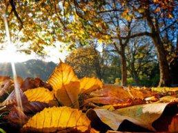 Harderwijk roept afname bomenbestand halt toe