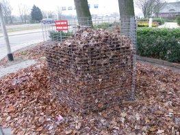 Bladkorven worden vanaf deze week in Harderwijk en Hierden weggehaald