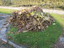 Gratis ophalen snoeihout, takken en blad in Harderwijk en Hierden