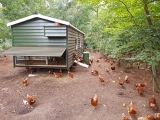 Burendag bij nieuwe kipcaravan Hierdense Kakelhoeve